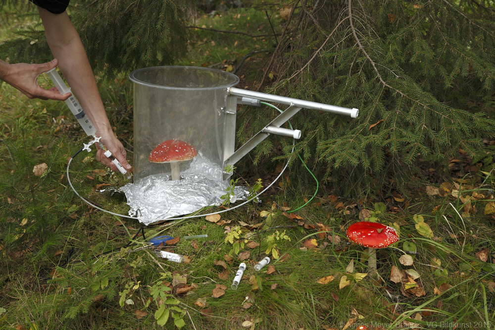 Agnes Meyer-Brandis, Measuring Amanita Mushroom Emissions, SMEAR forest research station, Hyytiälä, FI, 2014