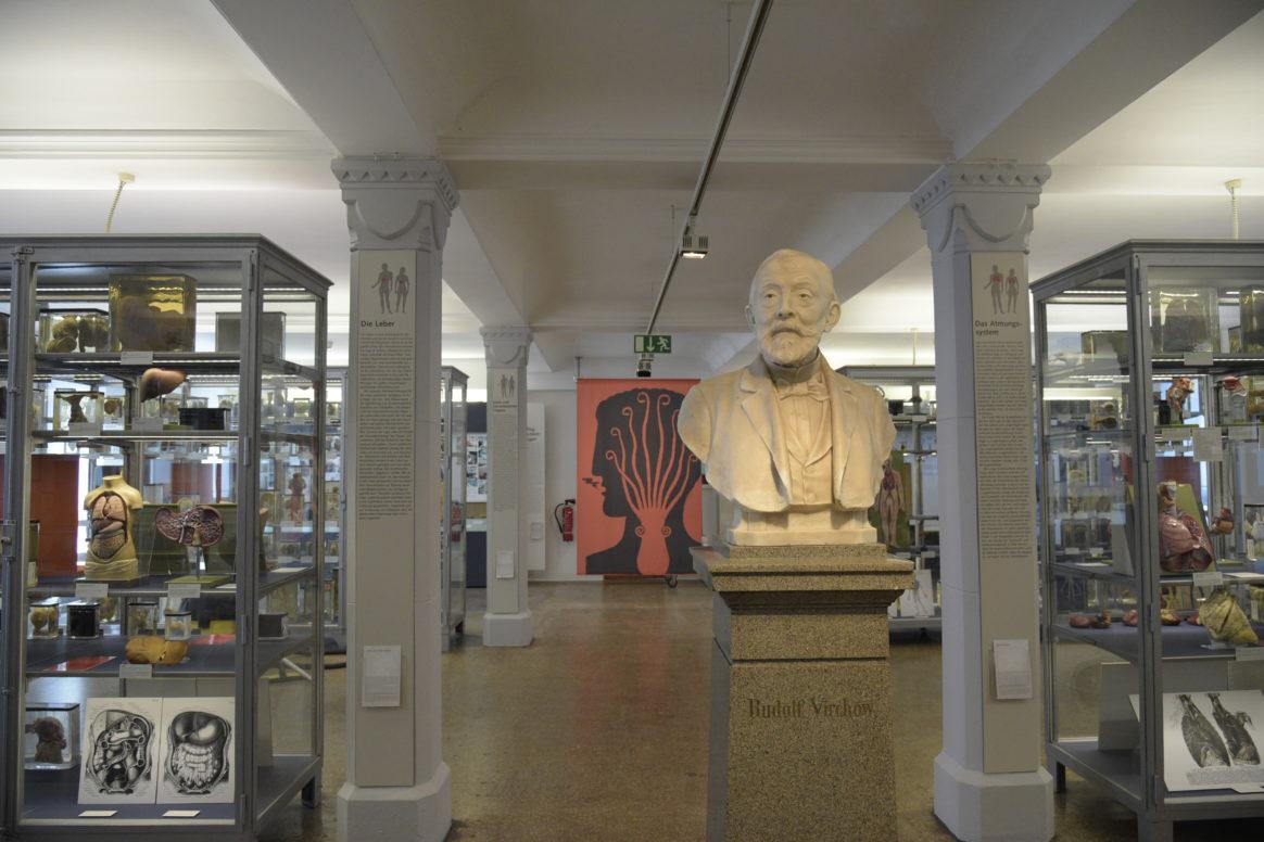 Die Seele ist ein Oktopus, Berliner Medizinhistorisches Museum Charite