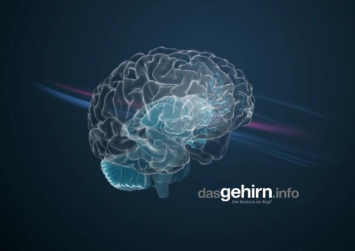 dasGehirn.info